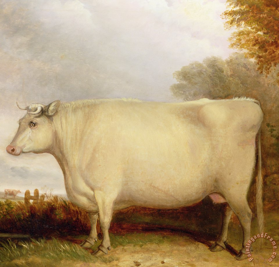 John vine white short horned cow in a landscape painting for Large prints for sale