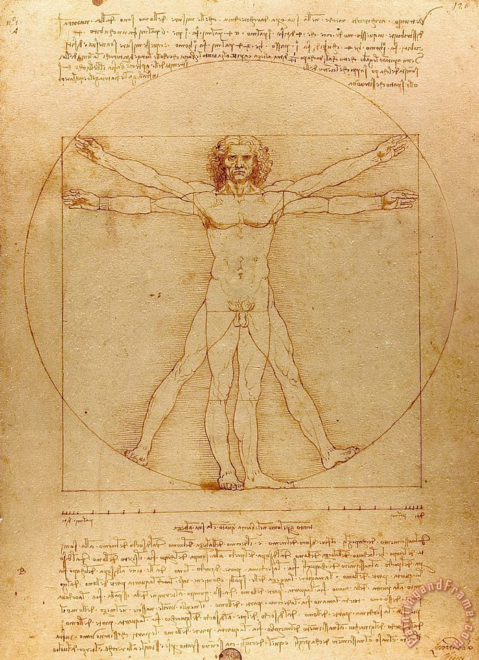 The Vitruvian Man painting - Leonardo da Vinci The Vitruvian Man Art Print