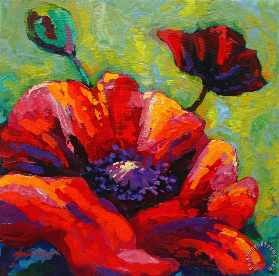 Marion rose poppy i painting poppy i print for sale for Watercolor art prints for sale