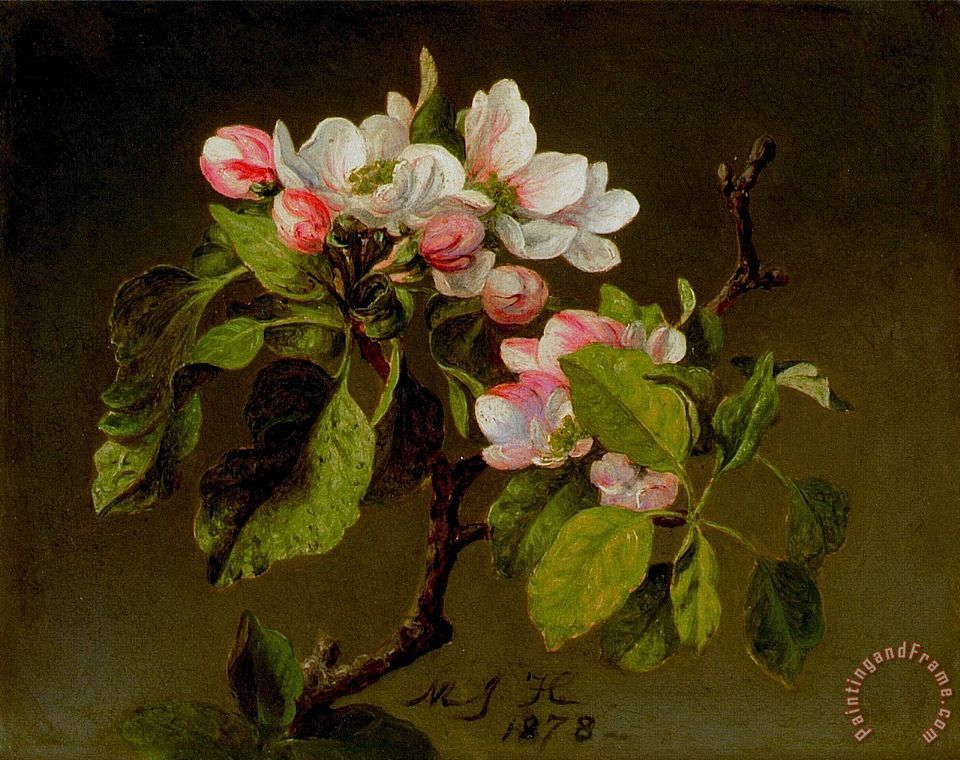 Martin Johnson Heade A Branch of Apple Blossoms And Buds Art Print