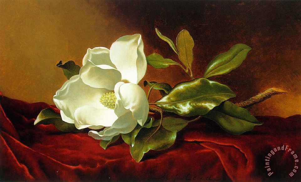 A Magnolia on Red Velvet painting - Martin Johnson Heade A Magnolia on Red Velvet Art Print