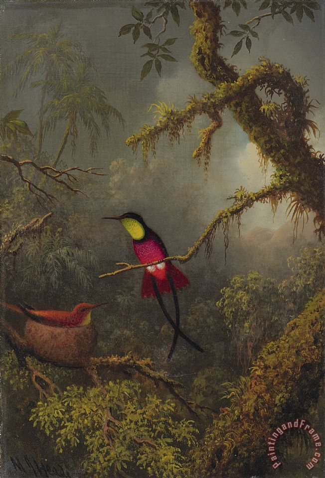 A Pair of Nesting Crimson Topaz Hummingbirds painting - Martin Johnson Heade A Pair of Nesting Crimson Topaz Hummingbirds Art Print