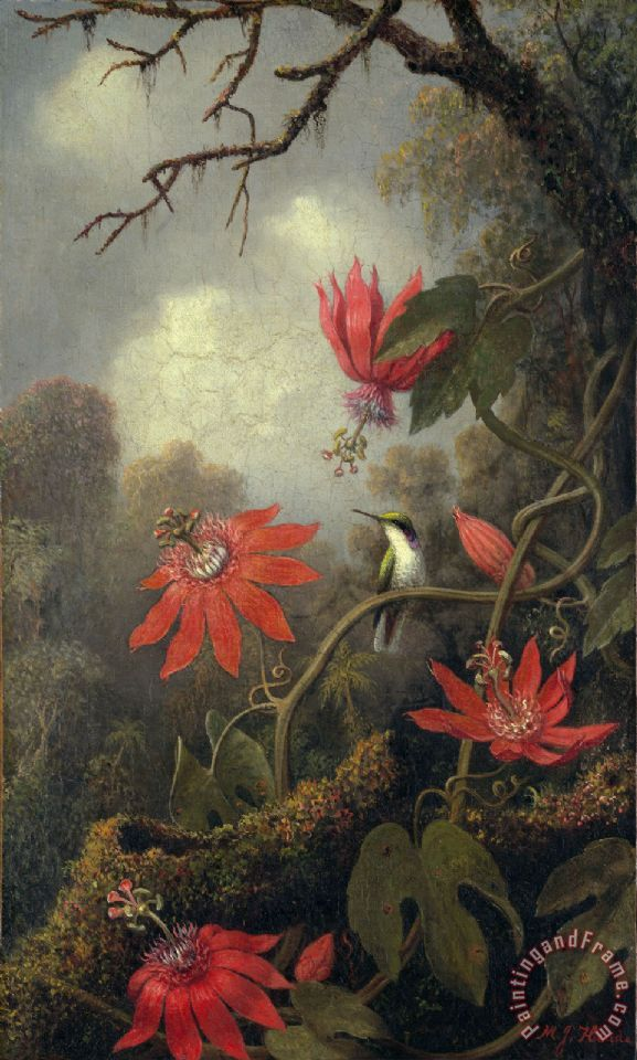hummingbird and passion flowers painting - Martin Johnson Heade hummingbird and passion flowers Art Print