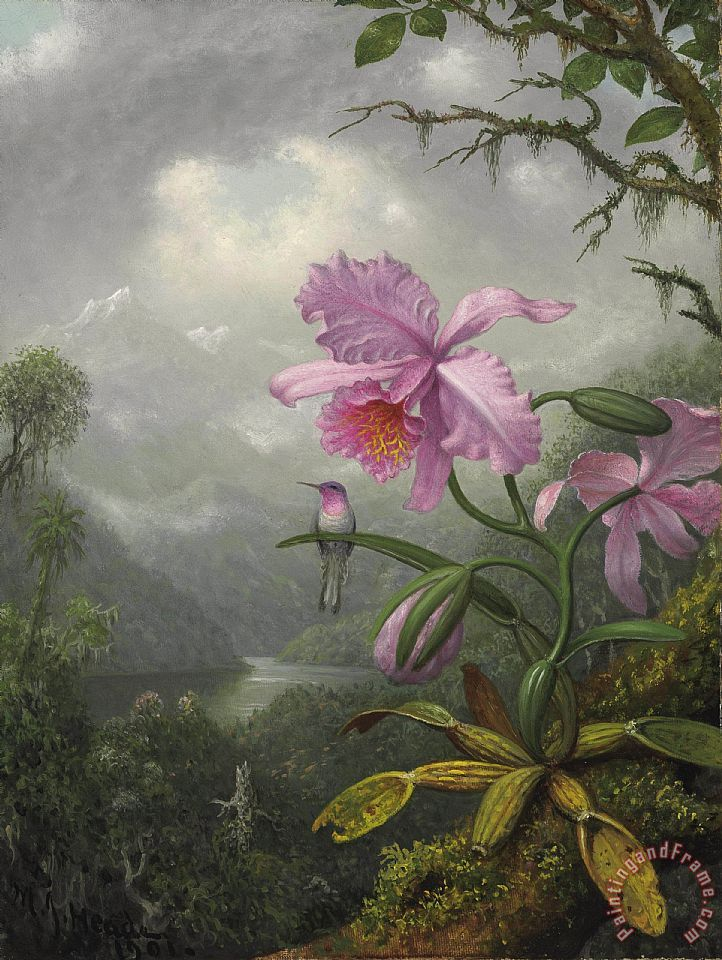 Hummingbird Perched on The Orchid Plant painting - Martin Johnson Heade Hummingbird Perched on The Orchid Plant Art Print