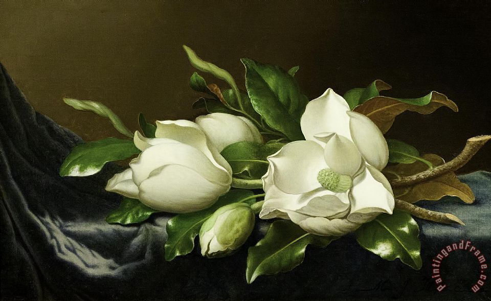 Martin Johnson Heade Magnolias on Blue Velvet Couch Art Print