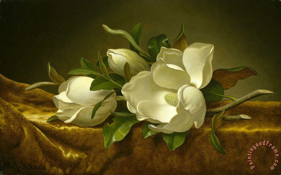 Martin Johnson Heade Magnolias on Gold Velvet Cloth Art Print