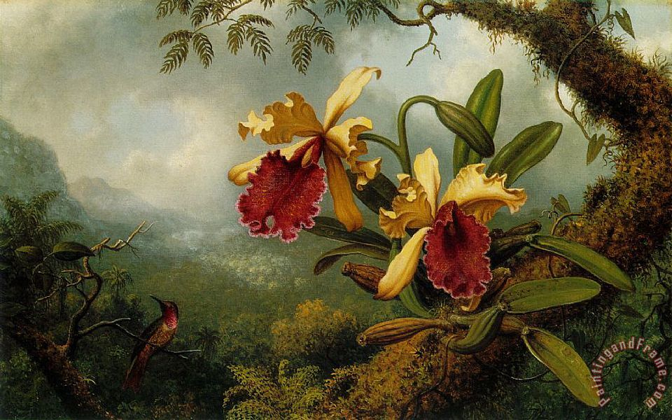 Orchids And Hummingbird painting - Martin Johnson Heade Orchids And Hummingbird Art Print