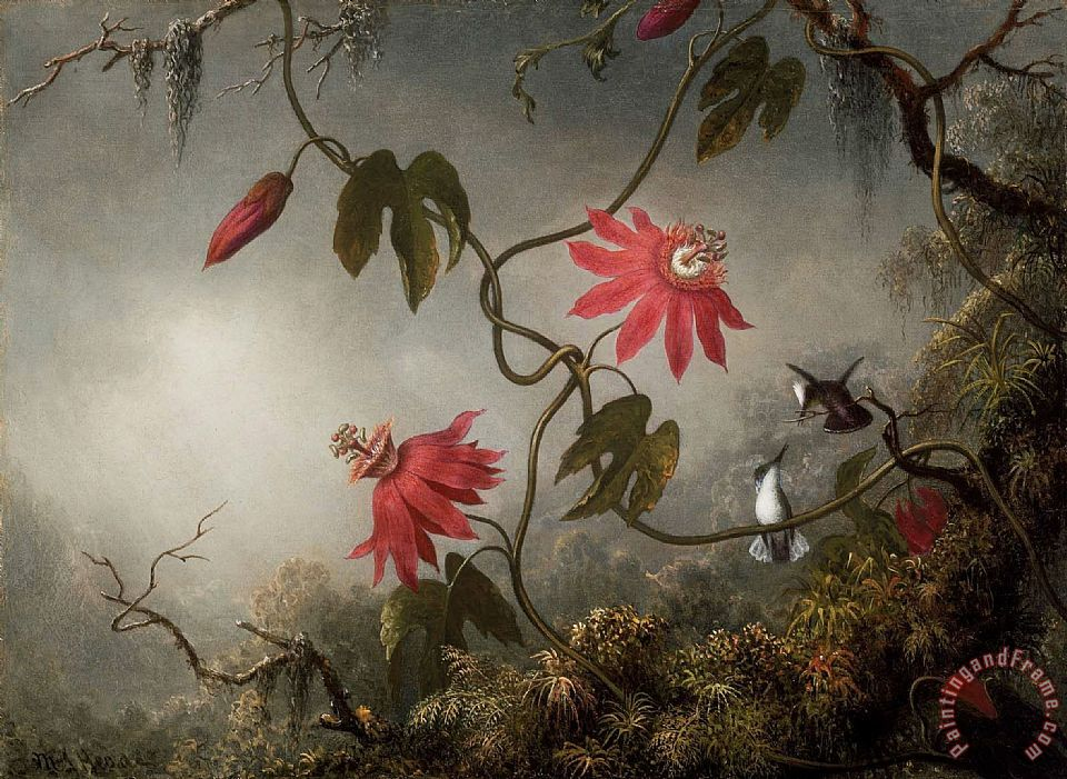 Martin Johnson Heade Passion Flowers And Hummingbirds Art Print