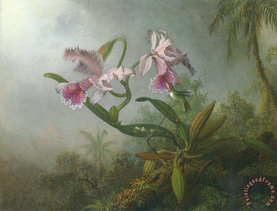Martin Johnson Heade Pink Orchids And Hummingbird on a Twig Art Print