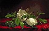 Magnolia by Martin Johnson Heade