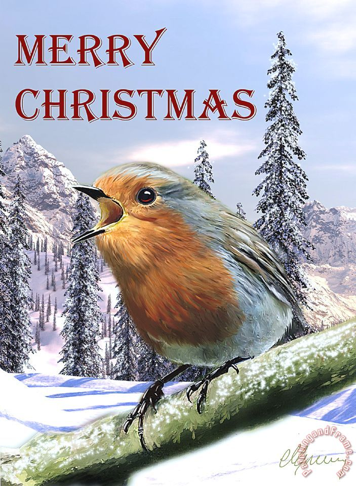 christmas card red robin painting michael greenaway christmas card red robin art print - Is Red Robin Open On Christmas