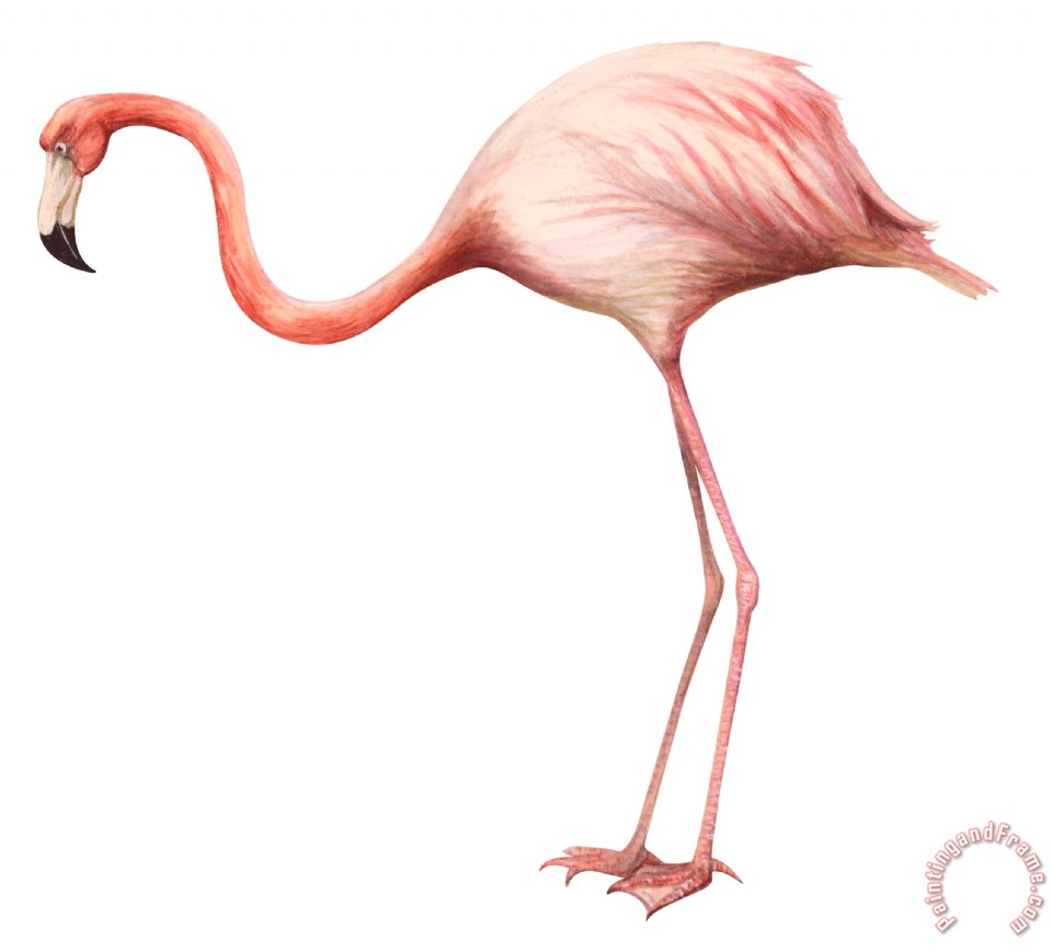 Others Flamingo Painting Flamingo Print For Sale