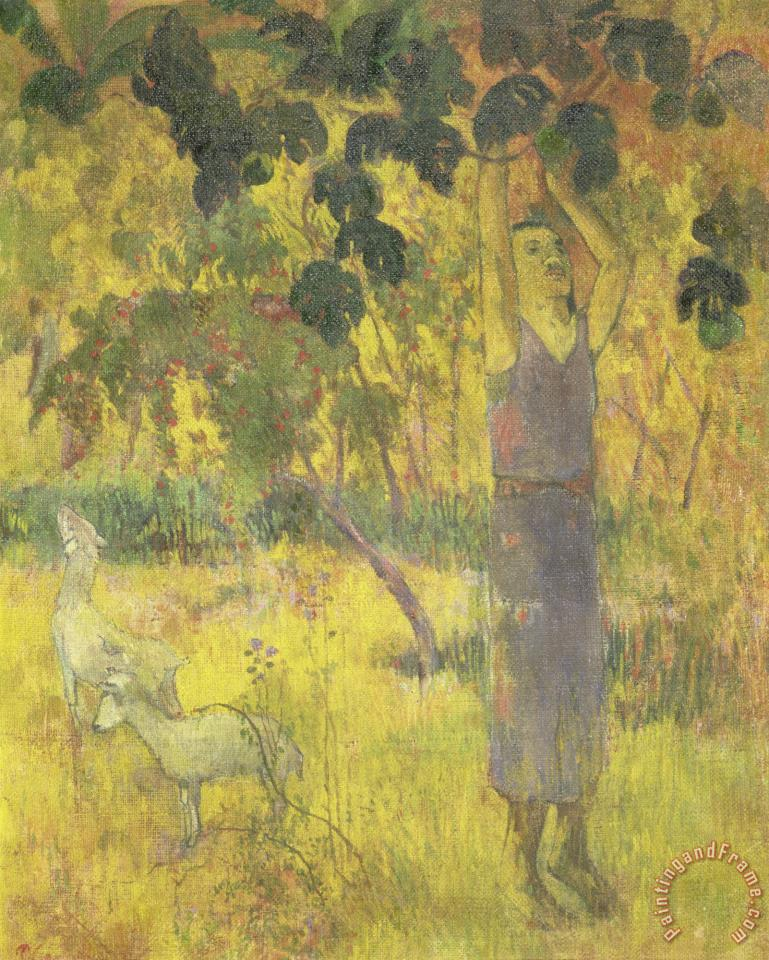 Man Picking Fruit From a Tree painting - Paul Gauguin Man Picking Fruit From a Tree Art Print
