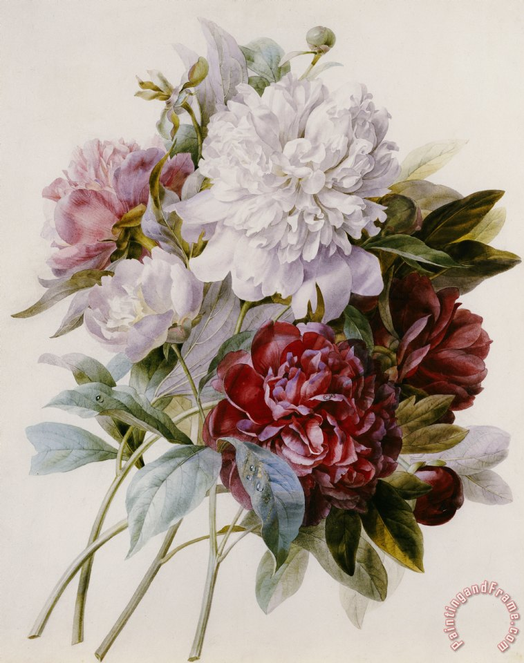 A Bouquet Of Red Pink And White Peonies painting - Pierre Joseph Redoute A Bouquet Of Red Pink And White Peonies Art Print