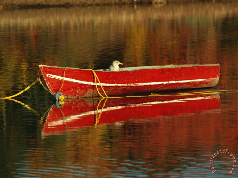 Well-liked Raymond Gehman A Gull Rests on an Old Rowboat painting - A Gull  MF02