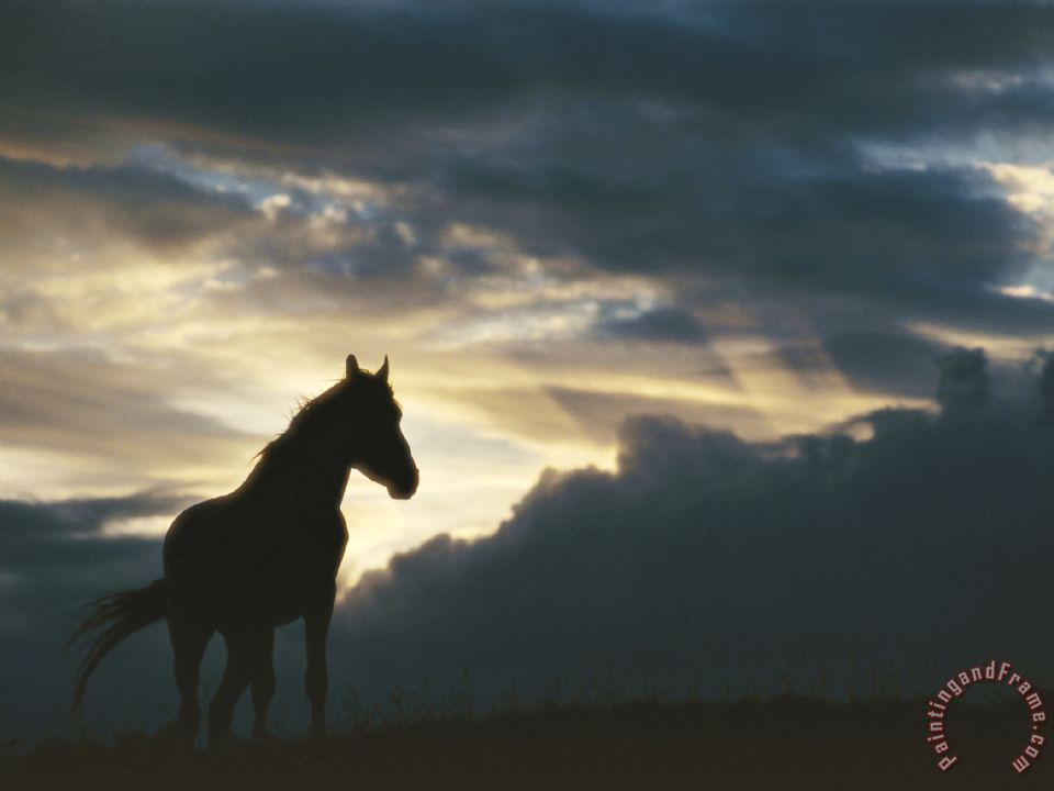 Raymond Gehman A Wild Horse Is Silhouetted by The Setting Sun Under Gathering Storm Clouds Art Print