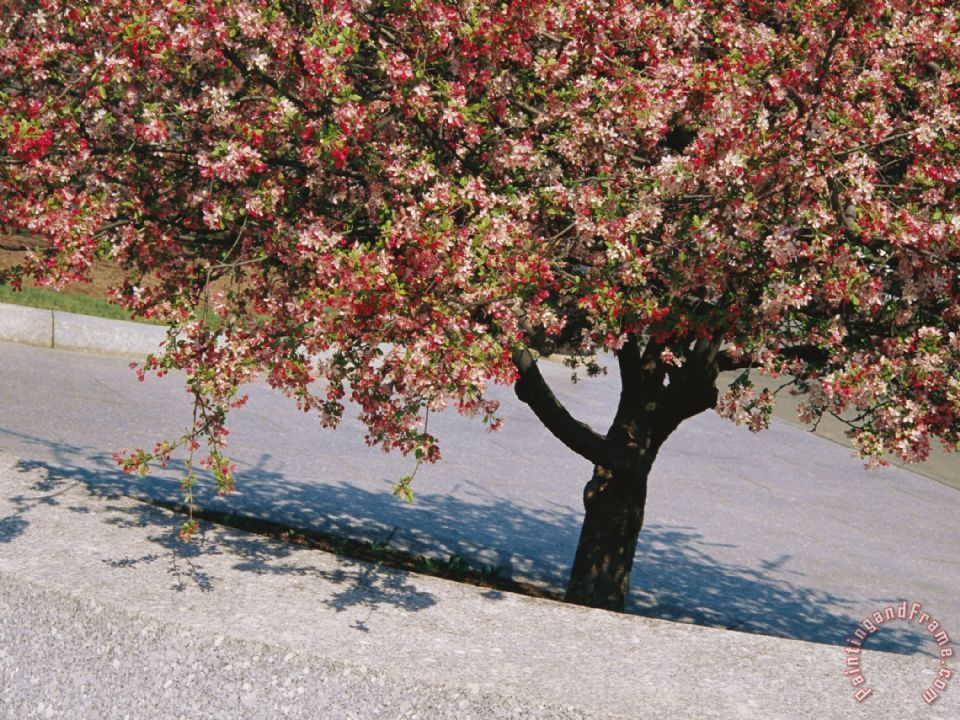 Blossoms on a Cherry Tree in Arlington Cemetery painting - Raymond Gehman Blossoms on a Cherry Tree in Arlington Cemetery Art Print