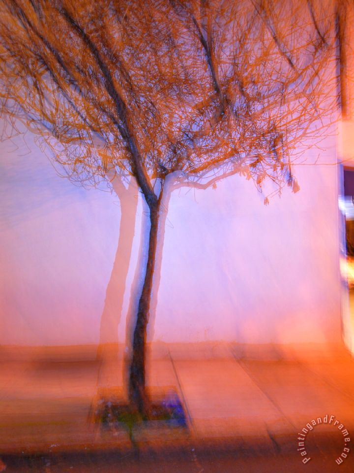 Flashed Tree And Its Shadow on a Wall in San Francisco painting - Raymond Gehman Flashed Tree And Its Shadow on a Wall in San Francisco Art Print