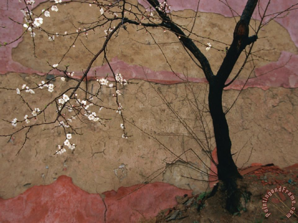 Plum Tree Against a Colorful Temple Wall painting - Raymond Gehman Plum Tree Against a Colorful Temple Wall Art Print