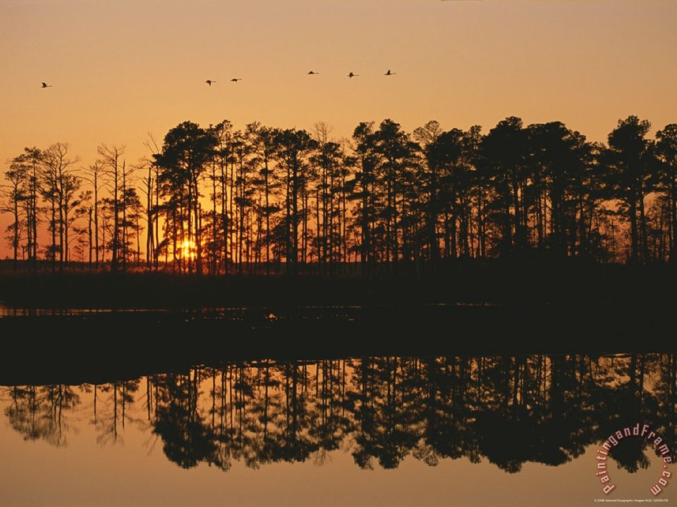 Raymond Gehman Sunset Behind Loblolly Pines on a Tidal Marsh Art Painting