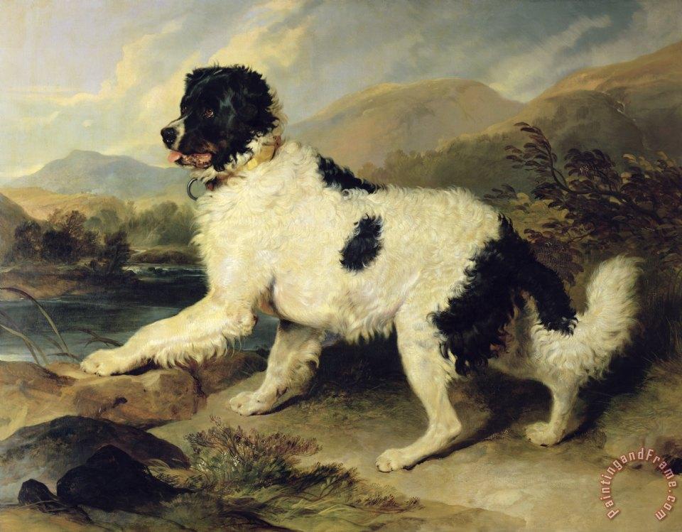 Sir Edwin Landseer Newfoundland Dog Called Lion Painting