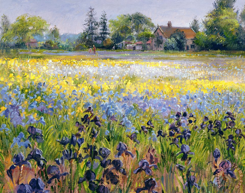 Irises and Two Fir Trees painting - Timothy Easton Irises and Two Fir Trees Art Print