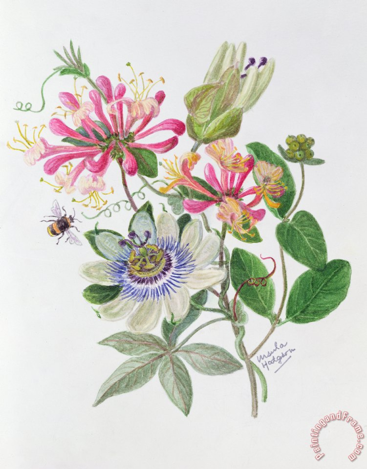 Honeysuckle And Passion Flower Painting