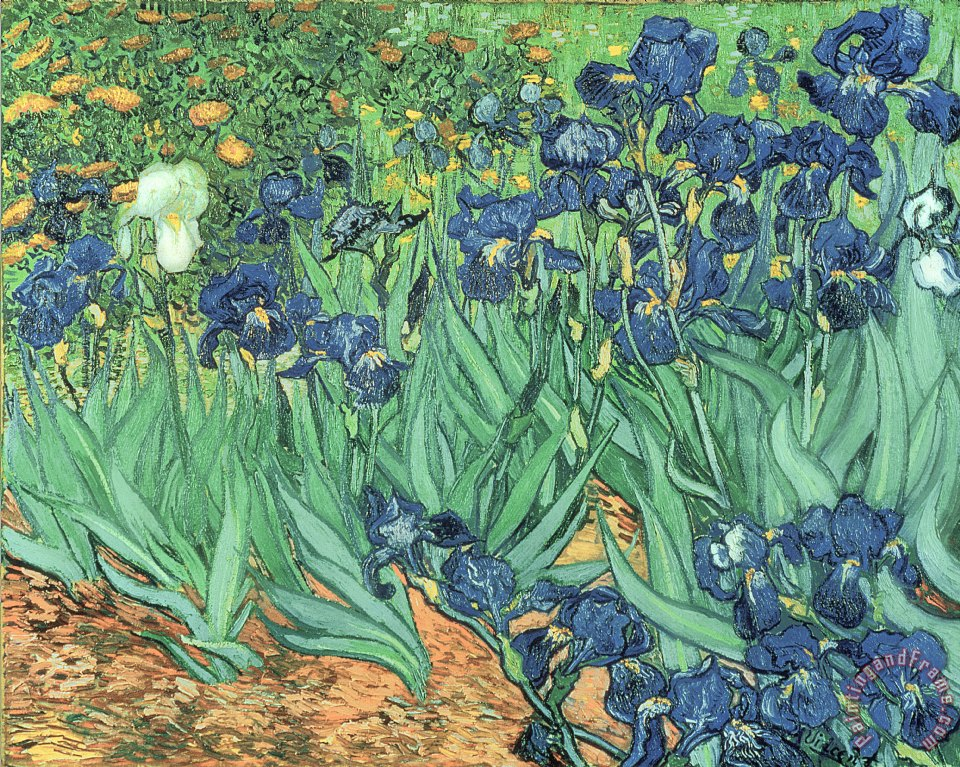 Irises painting - Vincent Van Gogh Irises Art Print