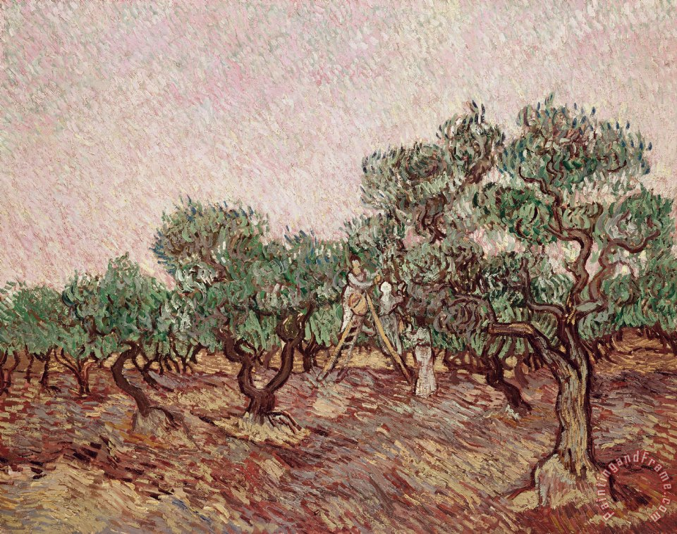 The Olive Pickers painting - Vincent van Gogh The Olive Pickers Art Print
