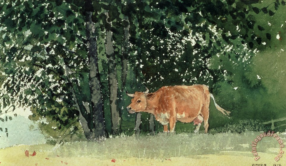 Cow in Pasture painting - Winslow Homer Cow in Pasture Art Print
